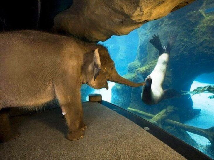 Animais que não disfarçam suas emoções elefante