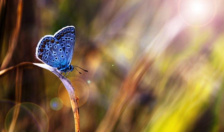 Animais espirituais borboleta
