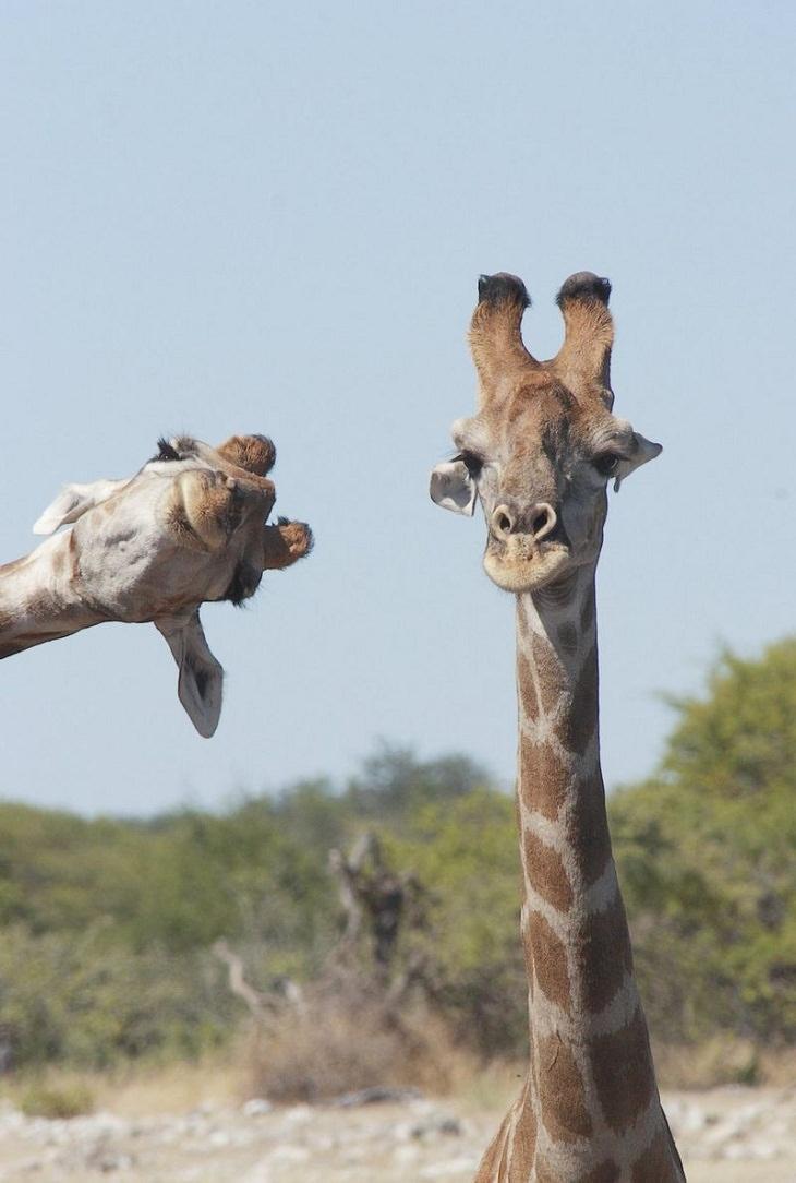 Fotos engraçadas do prêmio Comédia da Vida Animal 2020