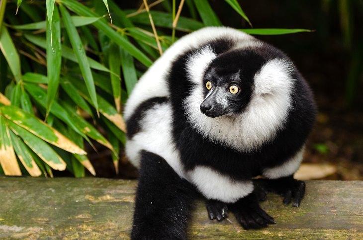 Belas espécies de animais pretos-e-brancos