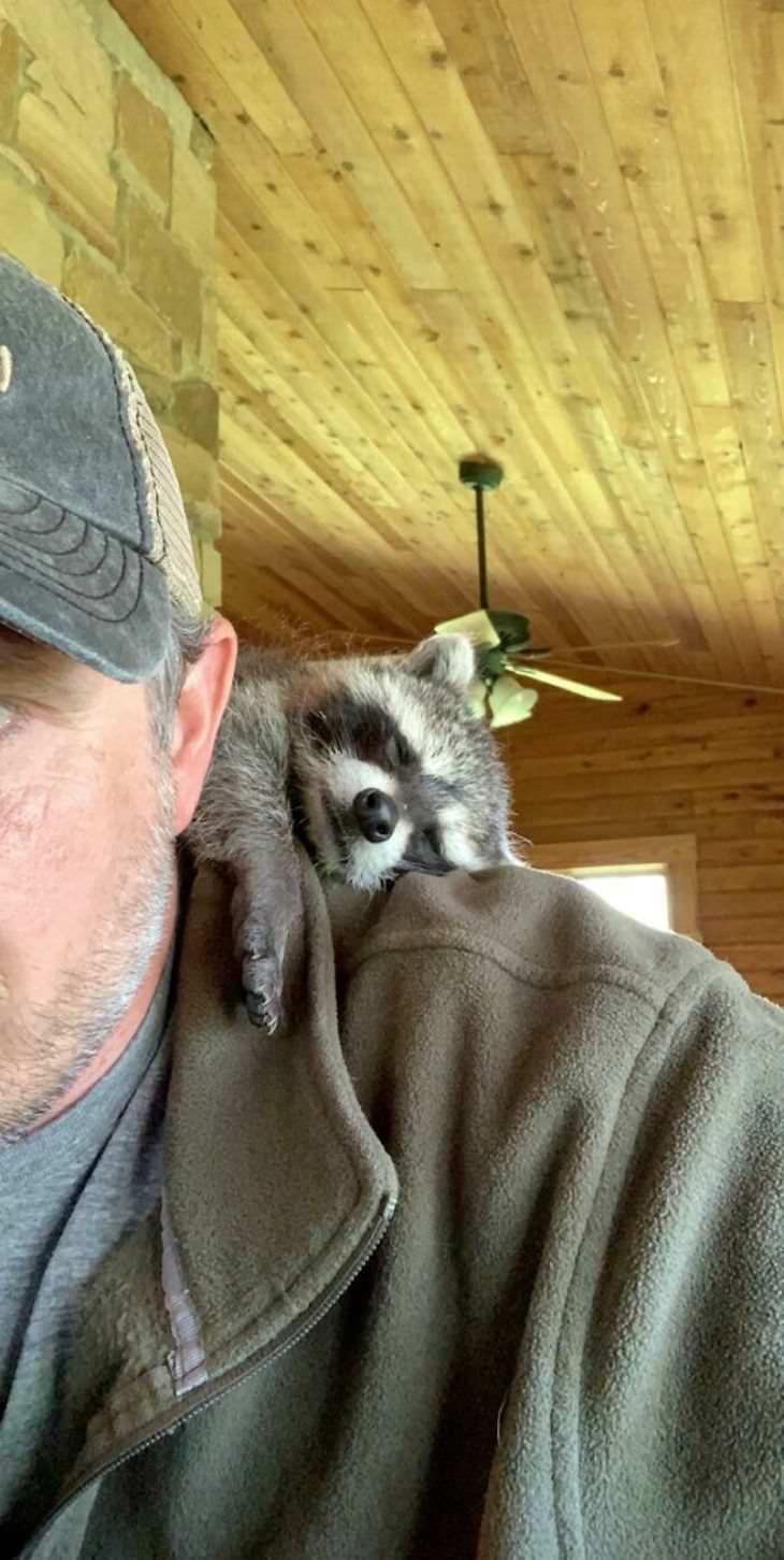 Animais de estimação sentados nos ombros dos donos
