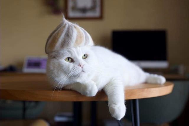 Gatos com chapéus