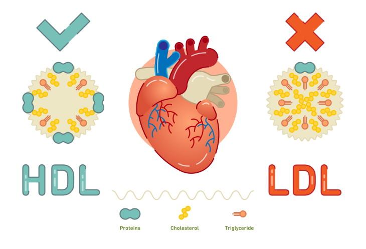 6 coisas que todos nós erramos sobre o colesterol