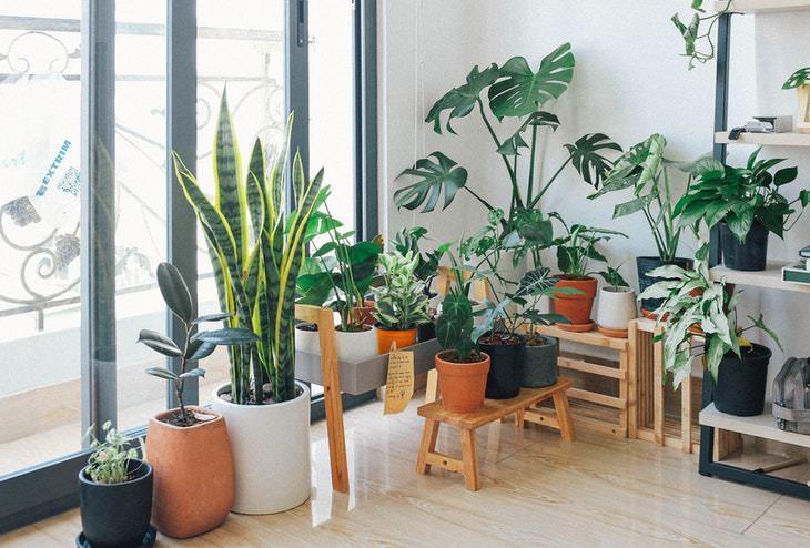 Plantas e purificação de interiores