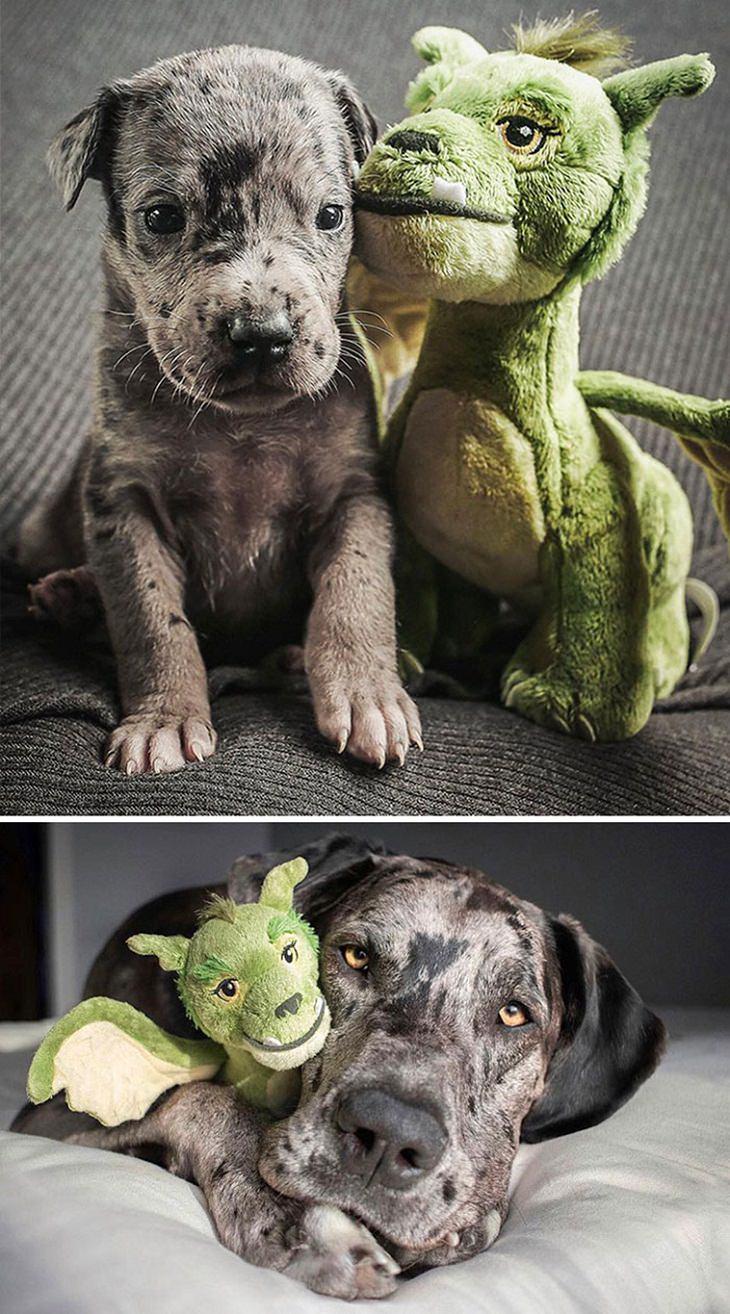 Os cães antes e depois de crescerem