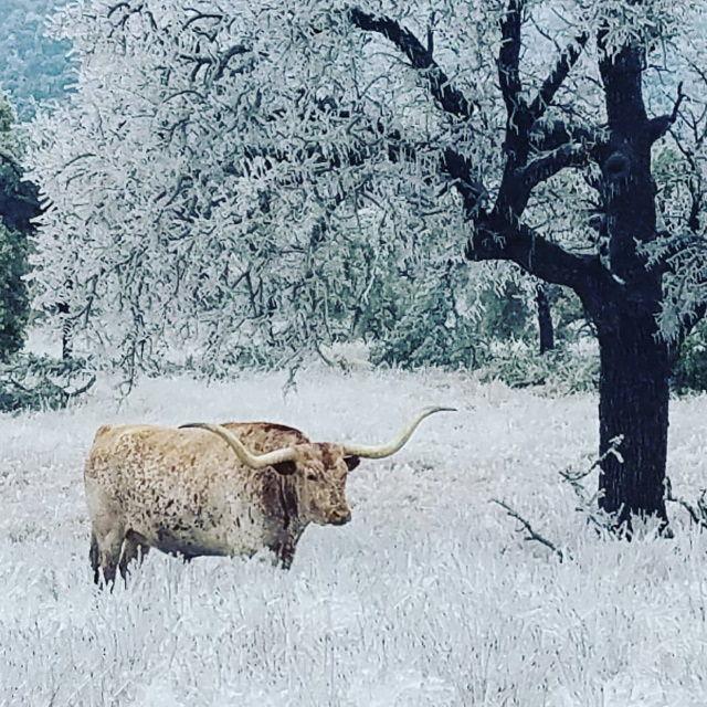 Imagens do inverno 2020-21 no Texas