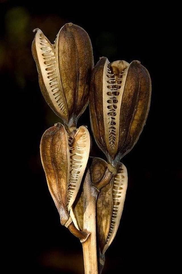 Beleza das sementes