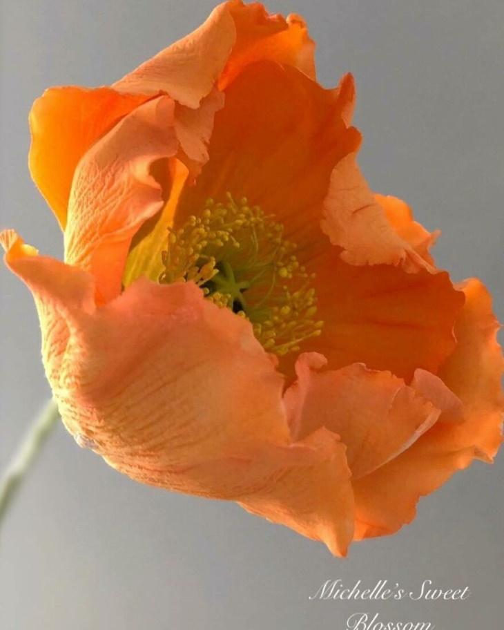 Flores de açúcar Michelle Nguyen