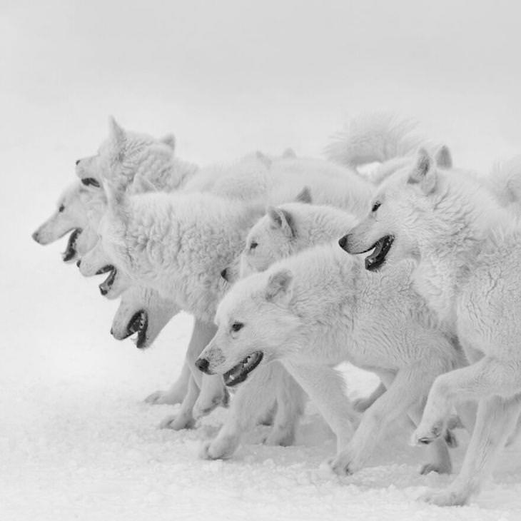 Imagens premiadas da natureza e da vida selvagem