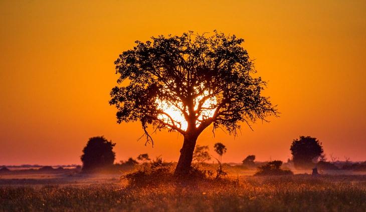 Sete fatos intrigantes sobre a savana africana