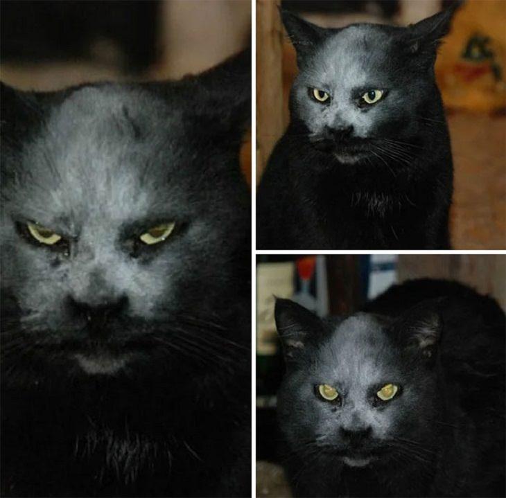 animais de estimação assustadores