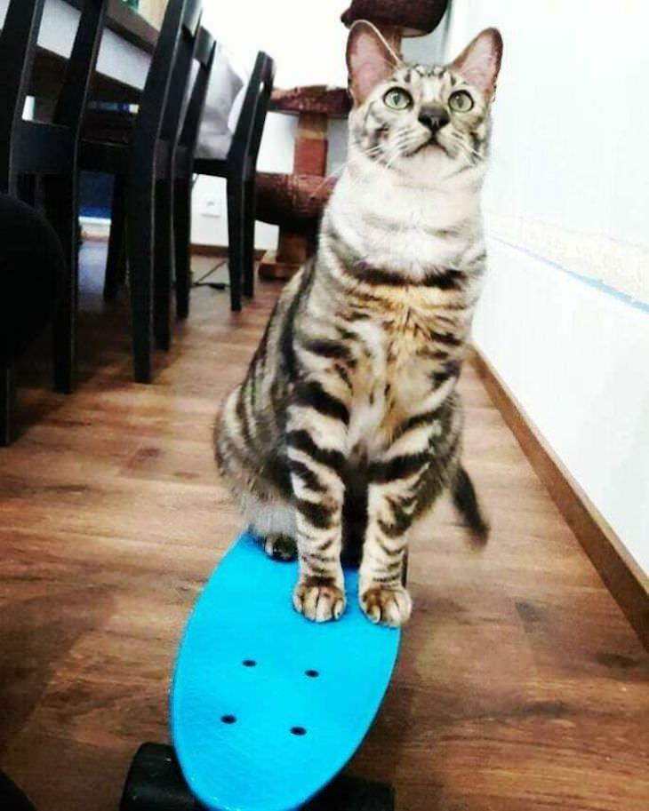 Nipa - o gato talentoso que conhece mais de 50 truques!