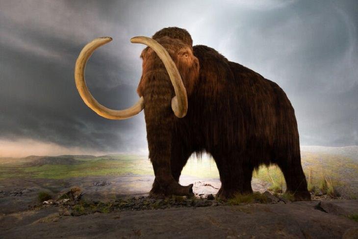 Mistérios não resolvidos, mamute cabeludo