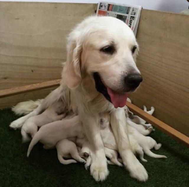 Momentos de mamães de cachorrinhos