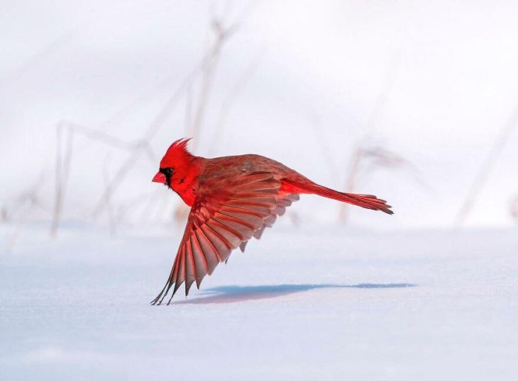 Vencedores do Audubon Photography Awards de 2021