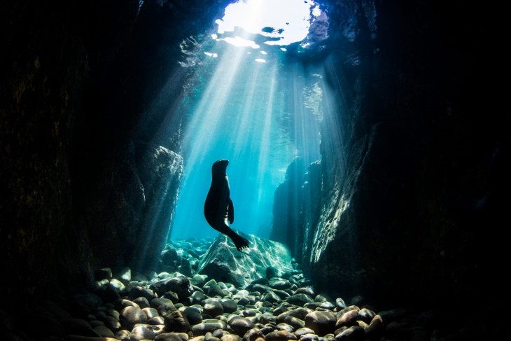 Concurso de fotos do Dia dos Oceanos 2021