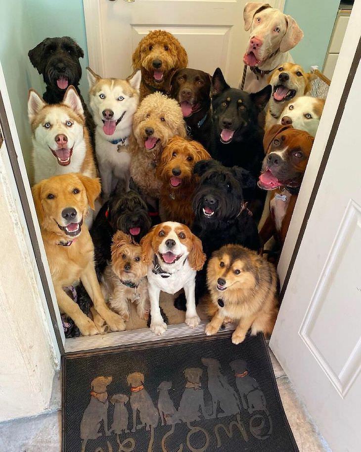 Fotos perfeitas e adoráveis de cães em grupo