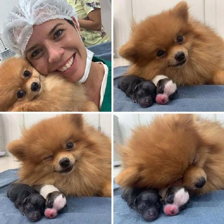 Fotos de veterinários com bichinhos fofos
