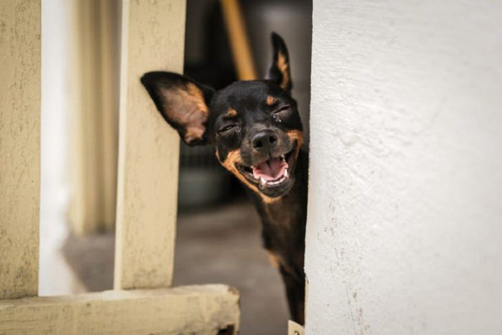 Comedy Pet Photo Awards 2021, dog, funny