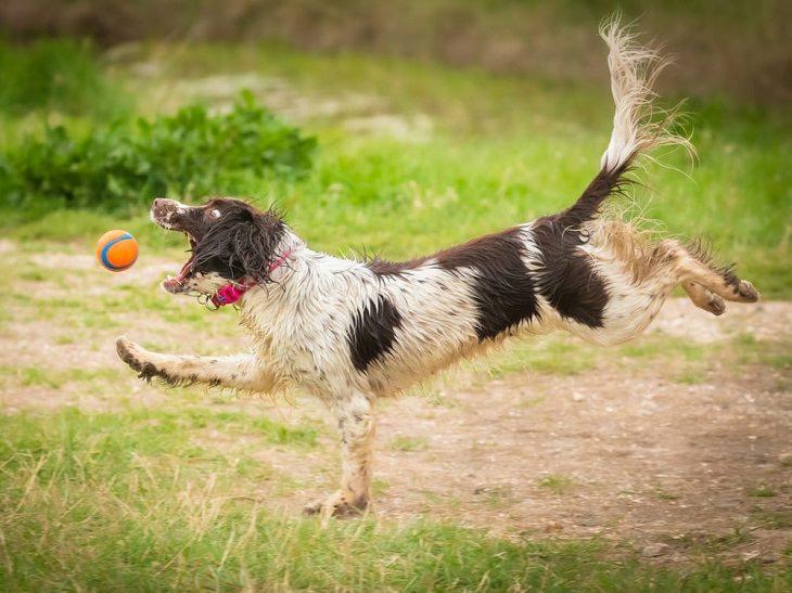 Comedy Pet Photo Awards 2021, dog, ball