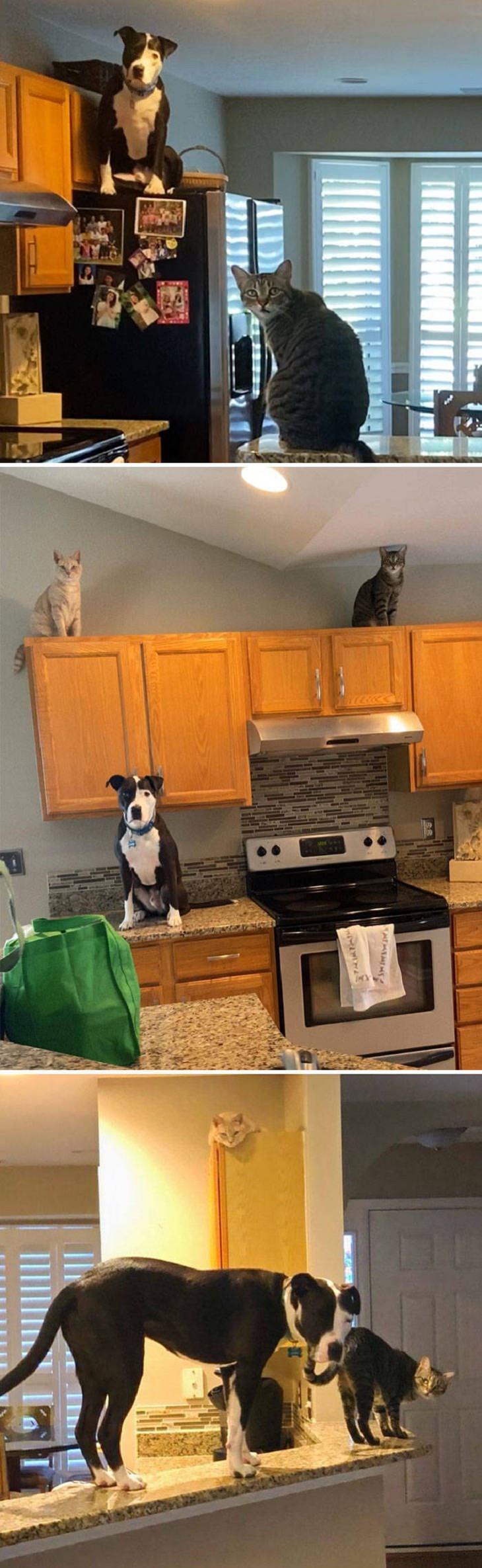 Os cães acreditam que são gatos, coisas de gato
