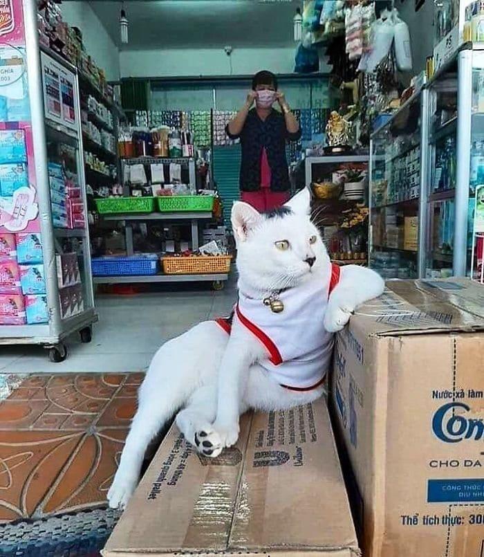 Gatos gerentes