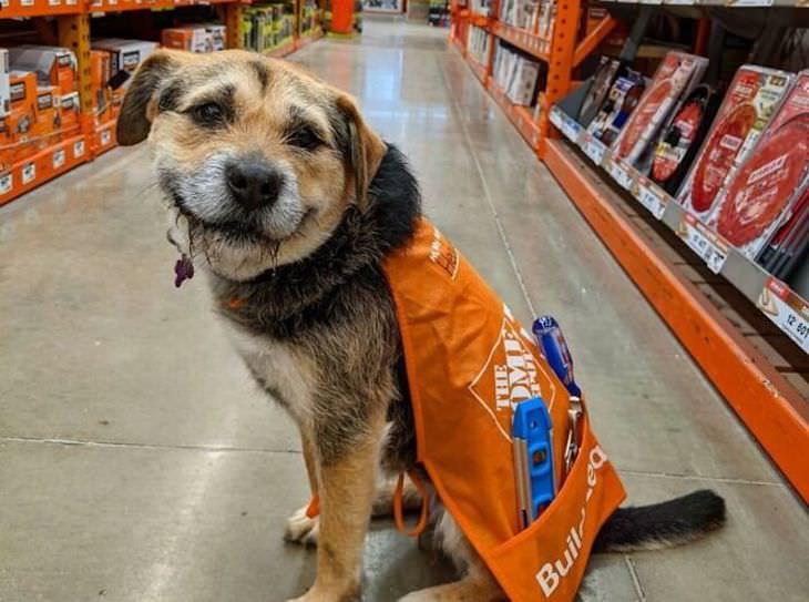 Cachorros adoráveis e divertidos vistos por toda parte