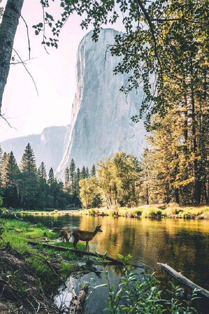 Fotos de contos de fadas, veados, lago,