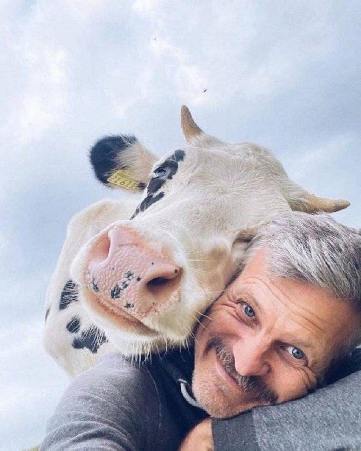Fotos de animais engraçados e fofos