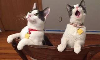 As Reações Hilárias de Animais Fofos Descobrindo o Mundo
