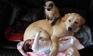Cãozinho, Gatinho e Bebê Transbordando Fofura