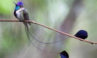 Os Beija-flores e Suas Magníficas Cores