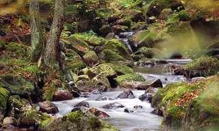 Arte Corporal em Harmonia Com a Natureza