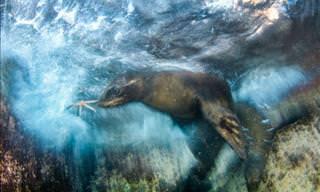 Confira os Vencedores do Prêmio de Fotografia de Vida Selvagem do Museu Nacional de Londres