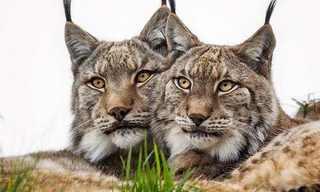 O Belo Reino Animal Por Marina Cano