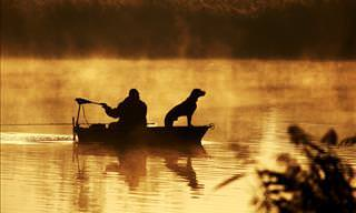 Quem sabia que os cães tinham habilidades de pescaria?