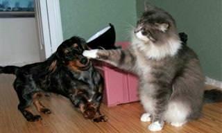 Cuidado Com Seus Gatos - Eles Podem Estar Escravizando Cães