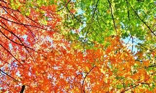 Este Lugar É Ainda Mais Belo no Outono...