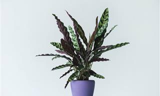 Plantas Que Podem Matar Você