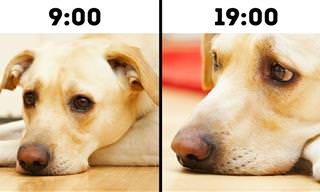 10 Erros comuns que cometemos com nossos pets