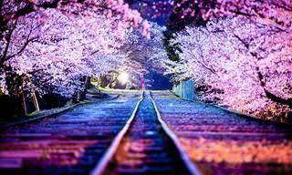 Depois de Ver Essas Imagens Você Vai Querer Visitar o Japão!