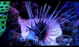 A Fascinante Vida do Mar Vermelho