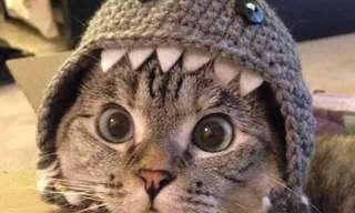 Obaaaa! Mais Um Dia de Gato!