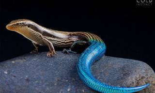 Fotos Lindas de Animais Coloridos