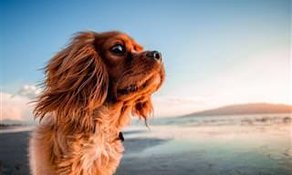 12 Fotos Lindas de Cães Curtindo o Verão