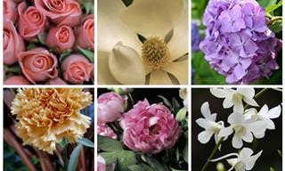 Escolha Uma Flor e Aprenda Mais Sobre Si Mesmo