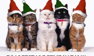 Oba! Outro Dia de Gato!