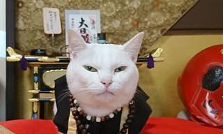 """""""NaMIAUstê!"""" Conheça o santuário de gatos no Japão"""