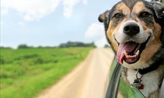 As Utilidades do Vinagre de Maçã Para Seu Cachorro