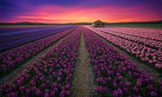 A Beleza dos Cenários Naturais da Holanda